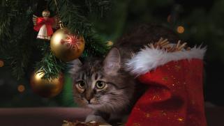 Quel objet offrir à un amateur de chats ?