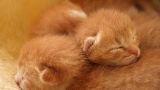 Adoption chaton : combien ça coûte ?