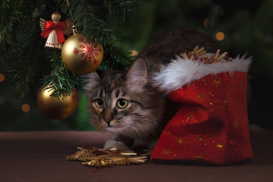 chat-cadeau