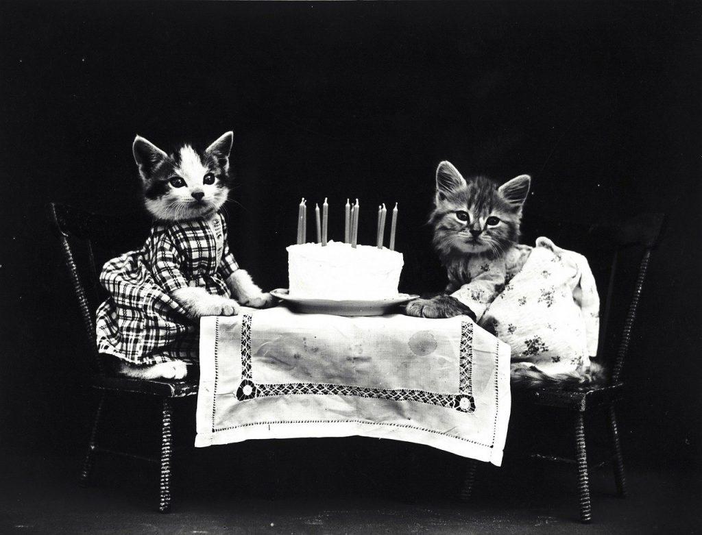 Deux chats déguisés assis face à face à une table avec un gâteau d'anniversaire rempli de bougies devant eux