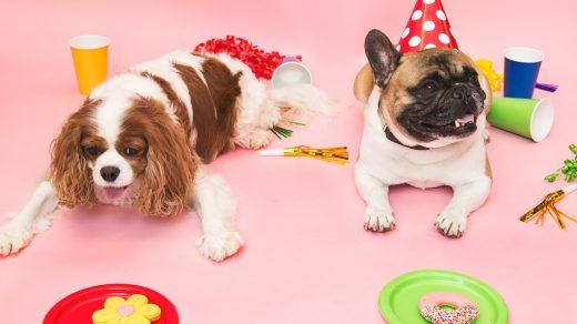 Deux chiens allongés sur le sol pour une fête d'anniversaire qui ont des assiettes devant eux avec des gâteaux